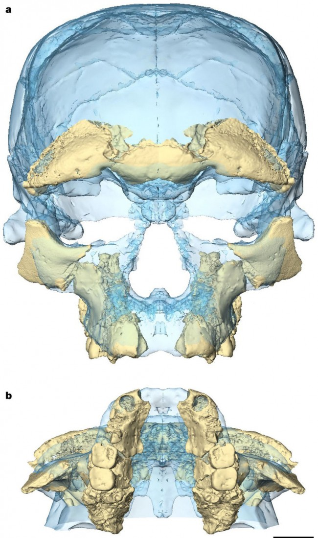 아프리카 북부 모로코에서 발견된 화석의 복원도. 최근 30만 년 전 호모 사피엔스 화석으로 확인됐다. - 네이처 제공